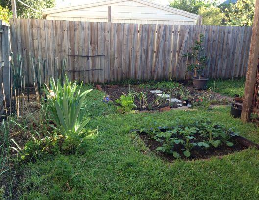 Back yard October 2013