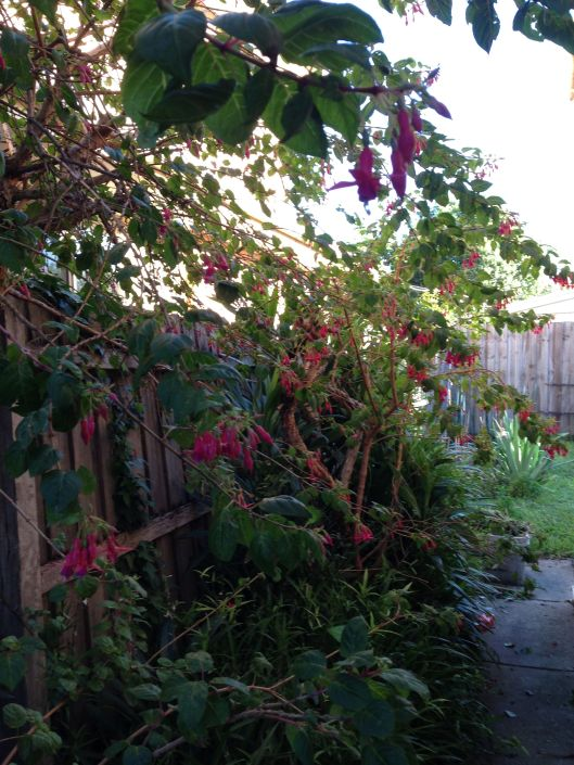 sidegarden2
