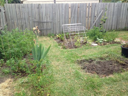 The backyard looking very dry.