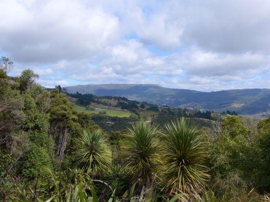 Dunedin 8