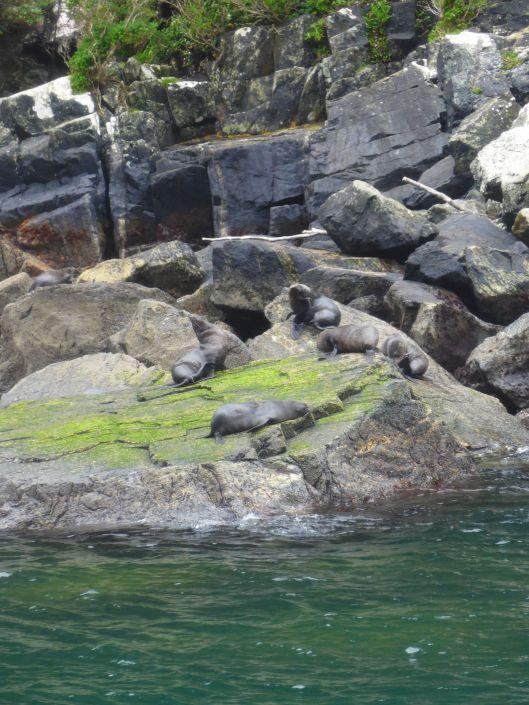 Milford Sound 28