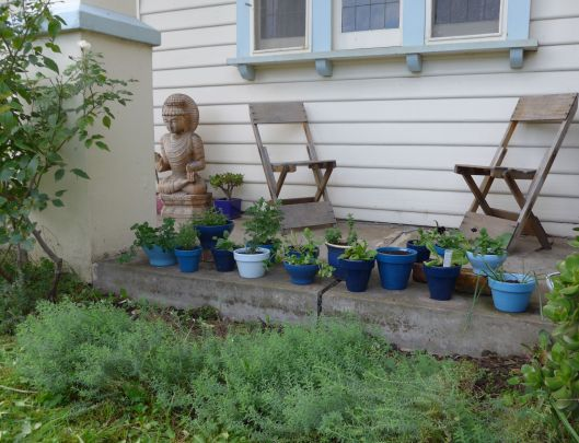 The herb/flower verandah garden is growing.