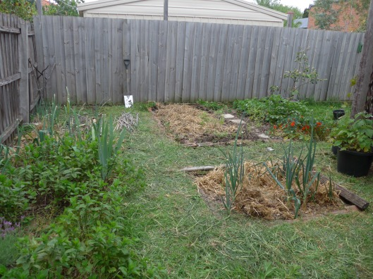 And, finally, the backyard after a weekend's uprooting and planting.